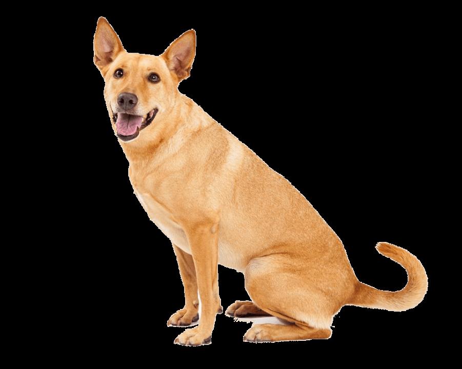 Apawtiser • Dog Treats for Intolerances • Worksop, Sheffield