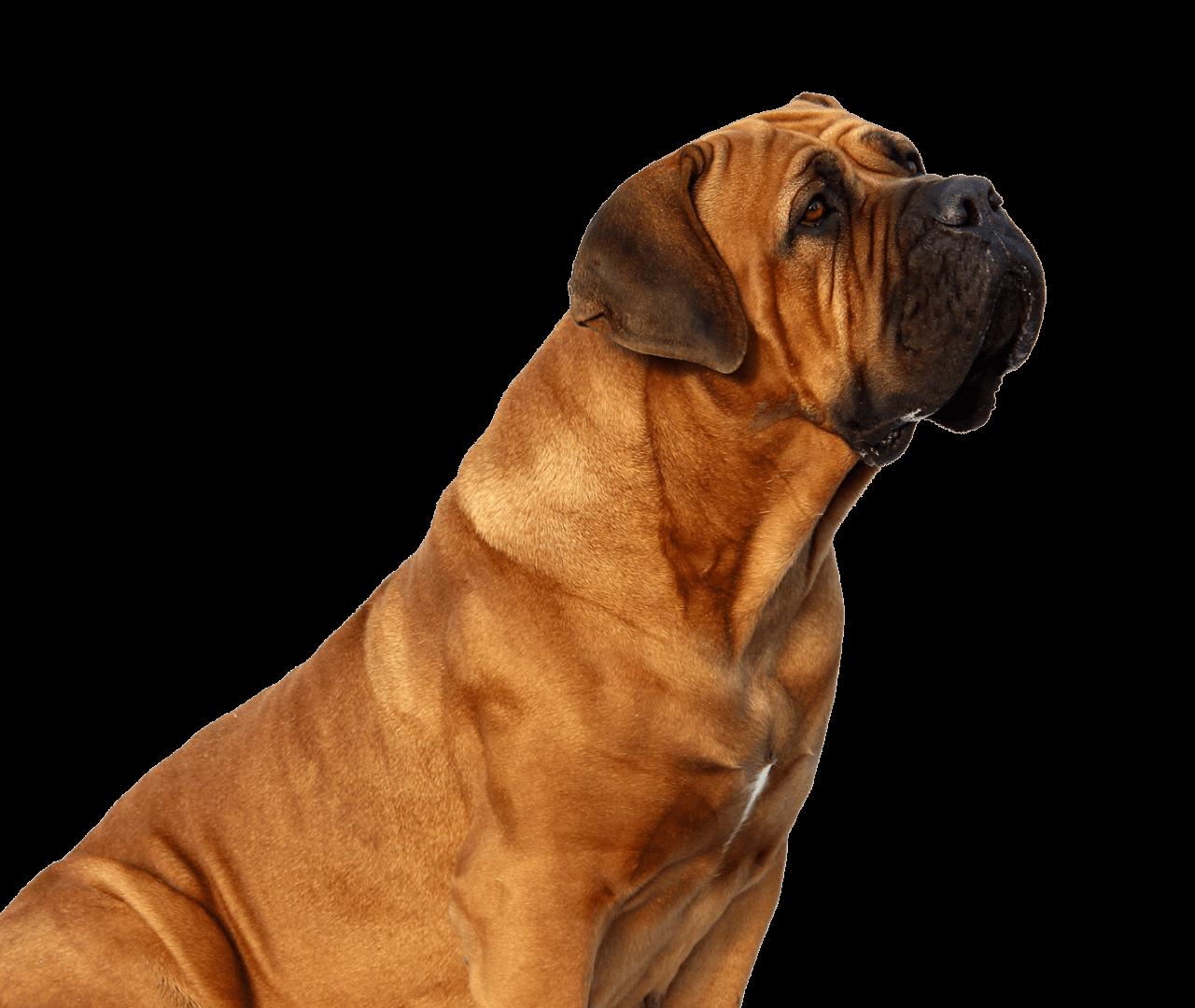 Apawtiser • Handmade Dog Treats in Worksop, Sheffield