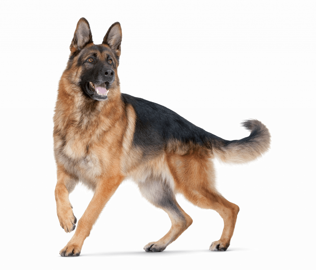 Apawtiser • Hypoallergenic Dog Treats in Worksop, Sheffield