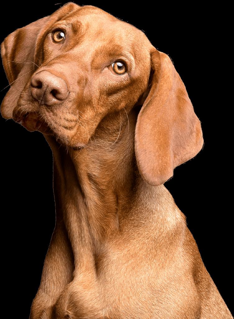 Apawtiser • Handmade, Hypoallergenic Dog Treats in Worksop